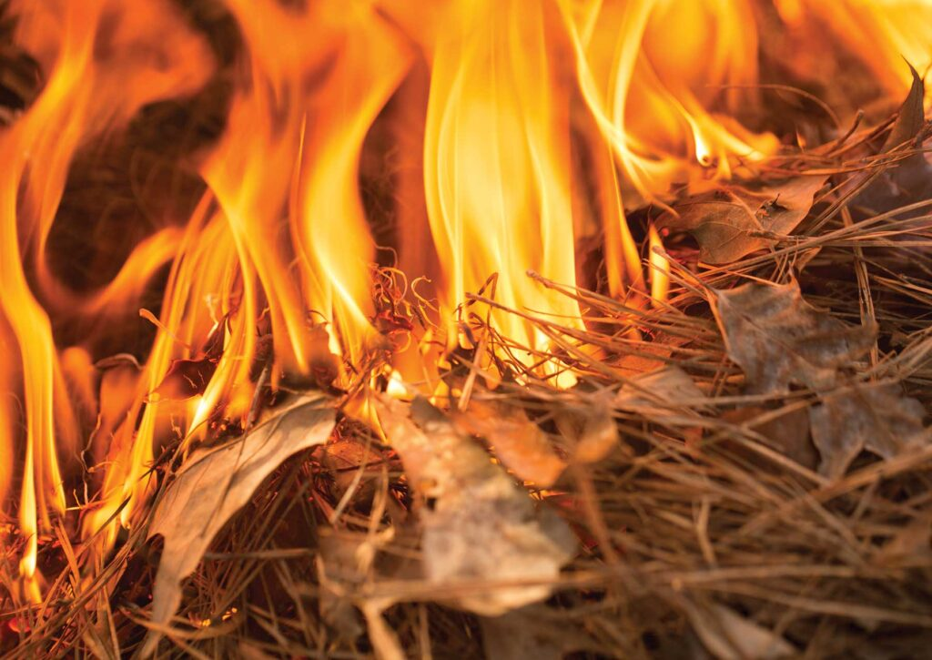 Dry leaves and grass caught on fire